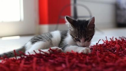 Gattino gioca sul tappeto