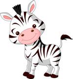 Fun zoo. Zebra