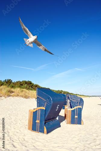 Strandkörbe am Strand mit Möwe