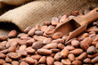 Cocoa beans and wooden scoop