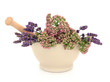 Lavender and Valerian Herb Flowers