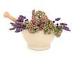 Lavender and Valerian Herb Flowers
