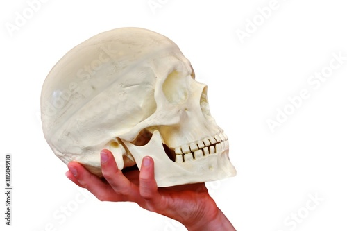 skull and white background