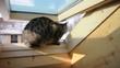 Katze am Dachfenster