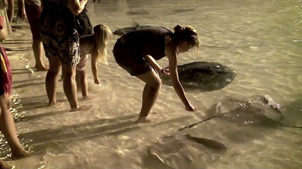 feeding stingrays in the Maldives