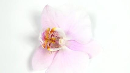 Zarte Orchideenblüte