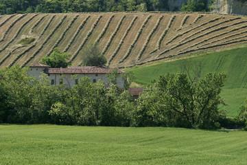 Vigolo Marchese, Castell'Arquato, campagna