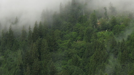 Time lapse of moving fog over the forest in alps