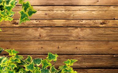 l'edera sulla parete di legno