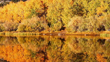 Colorful Aspen Trees Reflecting in Mountain Lake