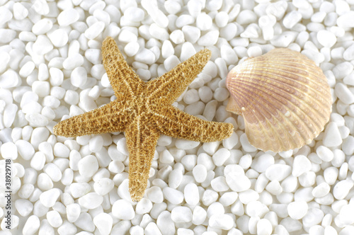 starfish and sea shells on pebble