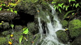 Lush Jungle Waterfall