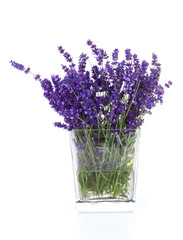 Bouquet of picked lavender flowers in vase