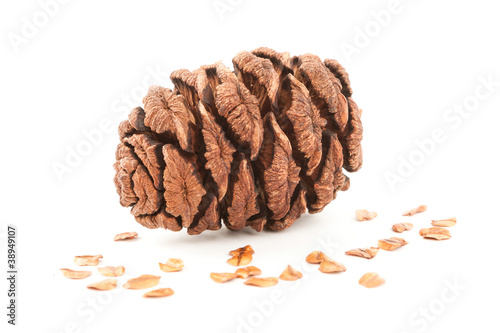 sequoia cone isolated on white background