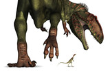 Dinosaur Size Comparison - Huge to Tiny poster