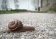 Snail crossing the street