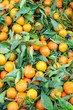 Box of tangerines