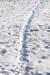 Animal tracks in snow covered fields