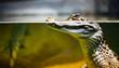 canvas print picture - Caiman crocodilus