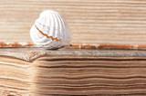 Stare księgi i muszla