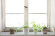 canvas print picture - 窓辺の観葉植物