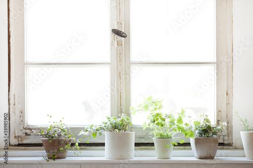 canvas print picture 窓辺の観葉植物