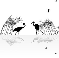 two cranes in rush with reflection