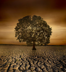 Single tree dying in a cracked land because of pollution