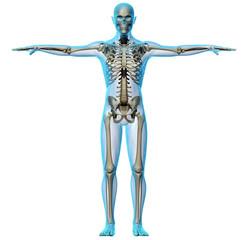 Raggi x scheletro e corpo umano