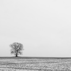 Tree and Solitude