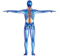 Corpo umano scheletro colonna vertebrale