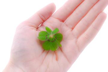 Glück in der Hand