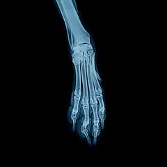 Röntgenbild Hundepfote