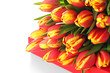 Festive red box with tulips isolated on white background