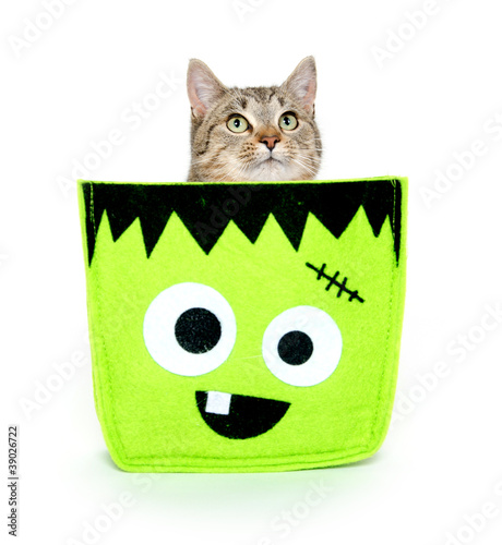 Cute cat in Halloween bag