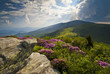Appalachian Trail Roan Mountains Rhododendron Bloom