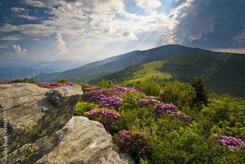 Appalachian Trail Roan Mountains Rhododendron Bloom - 39038707