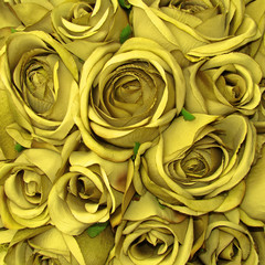 yellow rose pattern