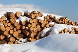 Snow log stack lumber in winter. Woodpile of pine poster