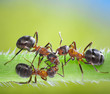 three ants consulting on grass
