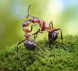 warm greetings of ants look like a kiss
