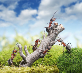 team of ants and rusty tree, teamwork concept