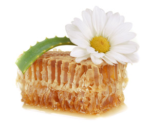 honeycomb and flower blooming medical chamomile