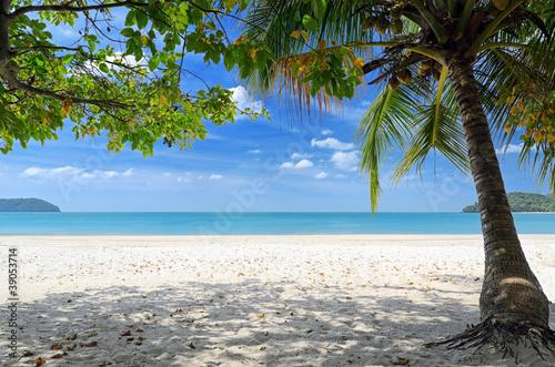 Fototapeten,reisen,baum,sand,sonne