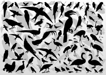 Birds and feathers silhouettes illustration collection