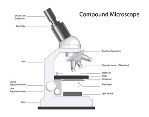 Compound Microscope with labels