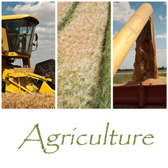 composition agriculture