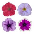 four petunias