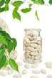 Herbal supplement pills and fresh leaves  alternative medicine
