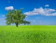 green tree among a fields